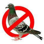 immagine di un piccione incorniciato da un cartello di divieto